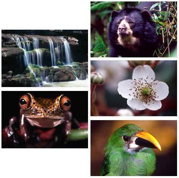 B1 Collage Bio